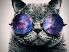 China puts quantum cats in space