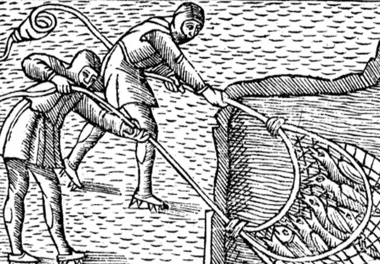 На гравюре, изображены рыбаки, вытаскивающие из озера сеть, наполненную зимующими ласточками.