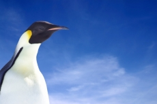 Google wants to use the Linux kernel