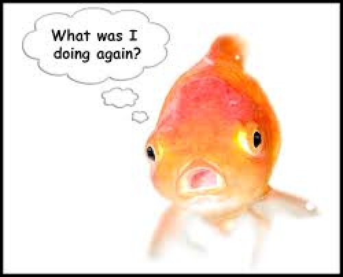 Smartphone users have the attention span of a goldfish